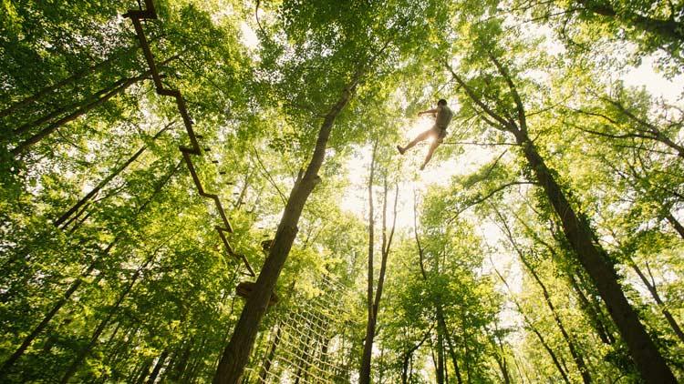 Go Ape Treetop Adventure 15