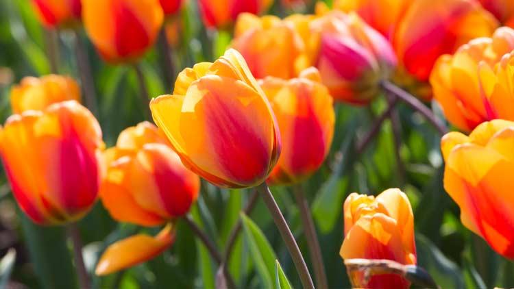 Springblooms07