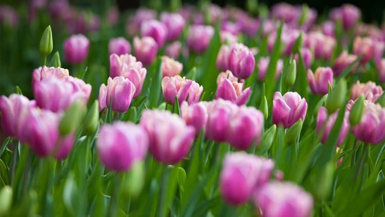 Springblooms02