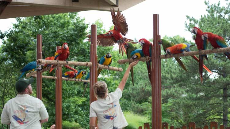 Macaws30