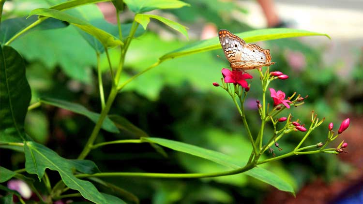 Butterfly Kaleidoscope 10