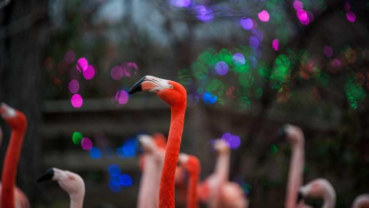 Christmas at the Zoo 33