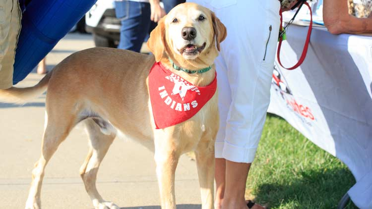 Bark in the Park with the Indianapolis Indians 2