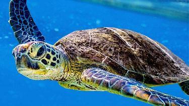 Turtle Odyssey 3D