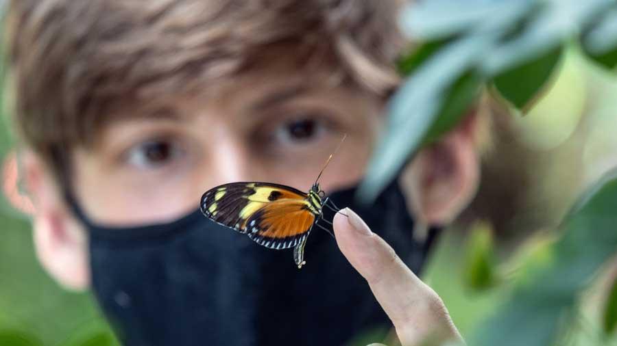 Butterfly Kaleidoscope 12