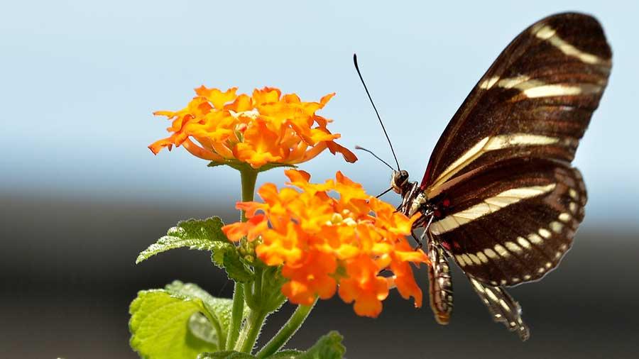 Butterfly Kaleidoscope 18