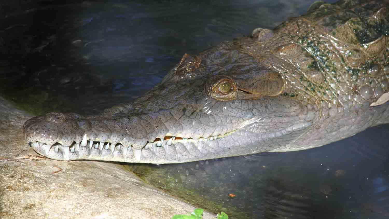 Alligators & Crocodiles - The Fight to Survive 6