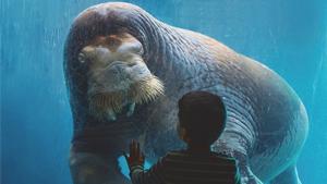 动物园——1400号——1600号的套餐