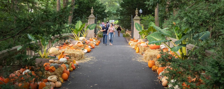 Fall Festivals Lead